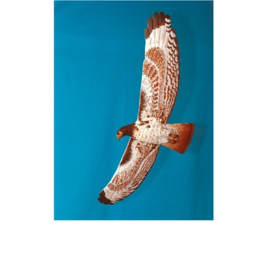 Zinks Red Tail Hawk (belly view) ~ Western red cedar, paint, life sized
